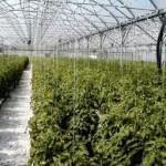 BeSimply...Inspiration {Greenhouse Farming}
