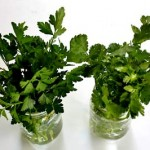 BeSimply...Cilantro {Remove Heavy Metals}