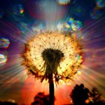 BeSimply...{Seeds of Light}