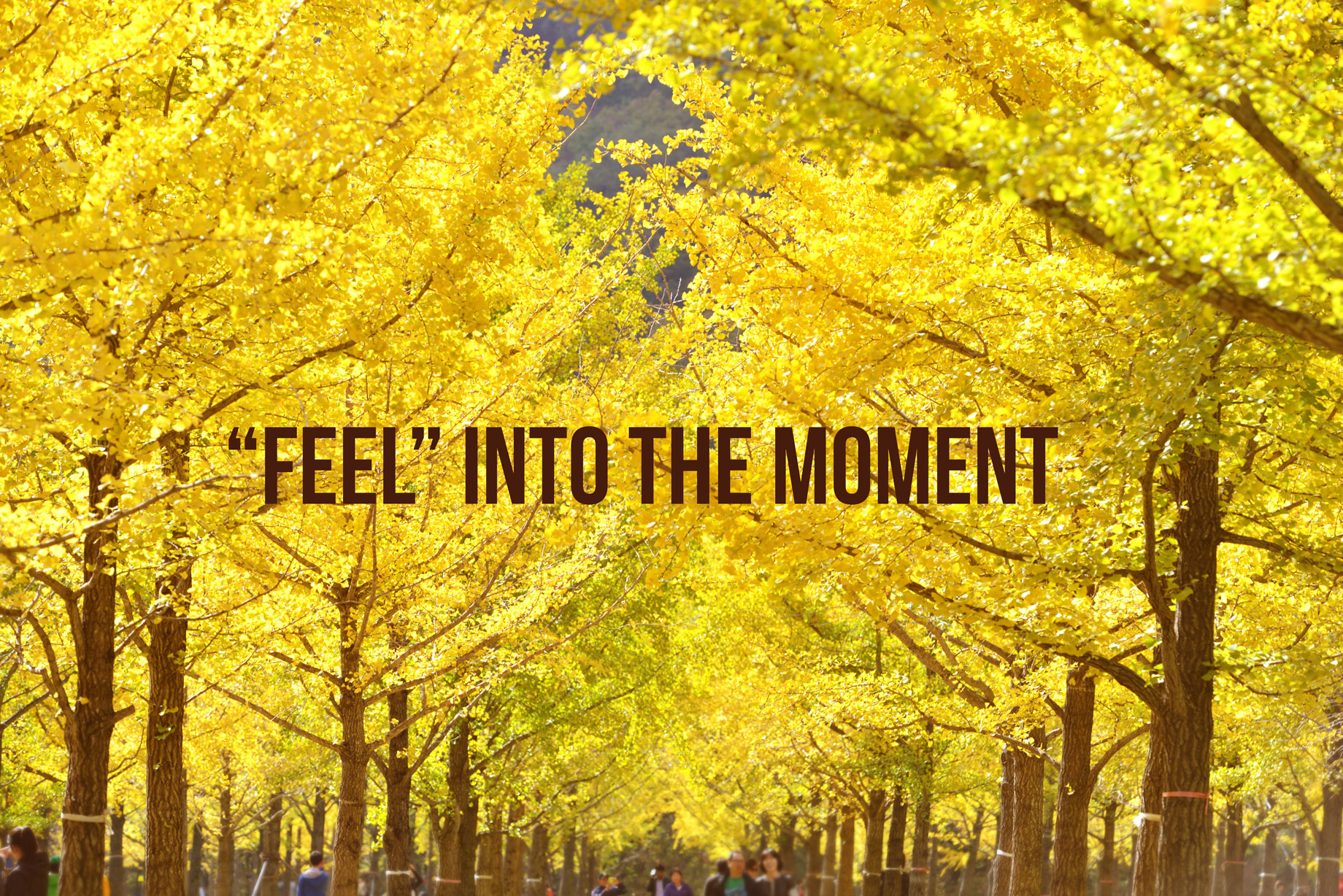feel into moment