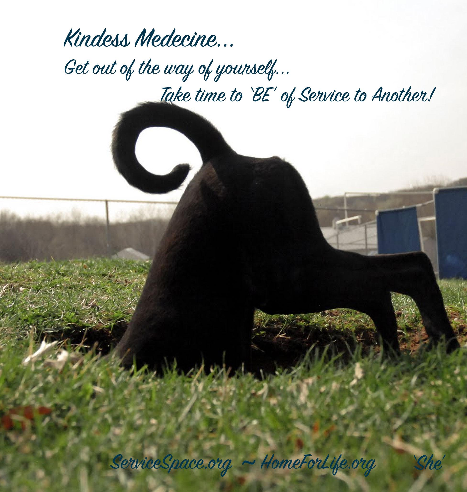 kindness medicine service